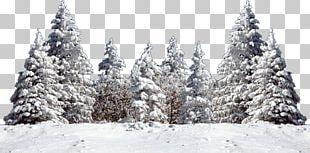 Christmas Tree Snow Fir Spruce PNG