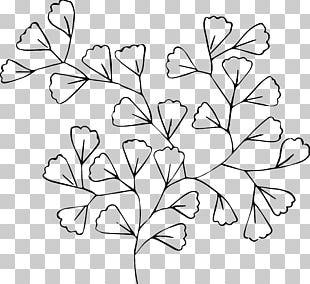 Black And White Line Art Flower Drawing PNG