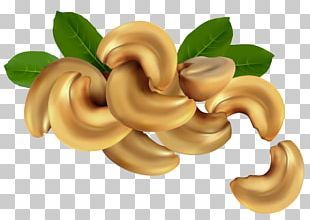 Cashew Nucule Stock Illustration PNG