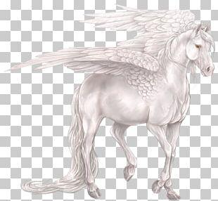 Pegasus Unicorn Horse Centaur Legendary Creature PNG