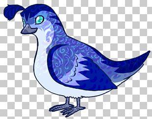 Quail Galliformes Cartoon PNG