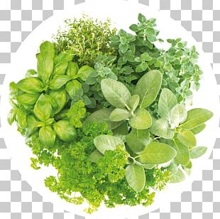 Herbal Tea Health Masala Chai Basil PNG