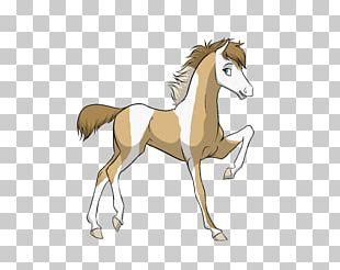 Mane Mustang Foal Colt Stallion PNG