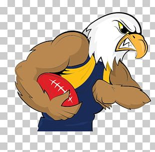 West Coast Eagles Australian Football League Pre-season Competition 2017 AFL Season Sydney Swans PNG