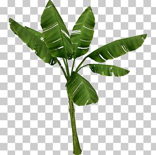 Zoo Tycoon 2 Tree Wiki Plant Temperate Forest PNG