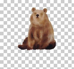 Baby Polar Bears Brown Bear American Black Bear PNG