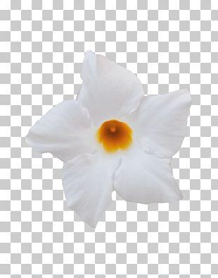 Brazilian Jasmine Light Plant Color Burgundy PNG