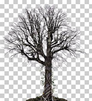 Tree Vine Drawing PNG