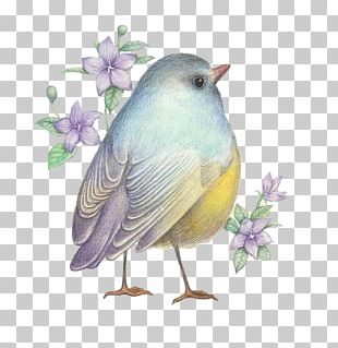 Drawing Birds Drawing Birds Illustration PNG
