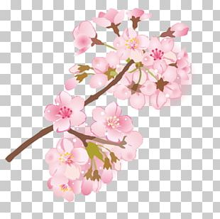 Cherry Blossom Branch Depiction 葉桜 PNG