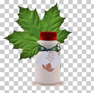 Maple Leaf Cream Cookies Maple Syrup PNG
