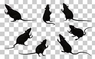 Whiskers Black Rat Laboratory Rat Mouse Rodent PNG