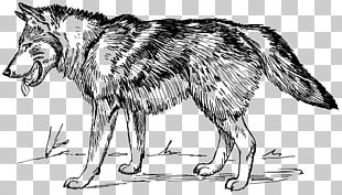 Arctic Wolf Black Wolf PNG
