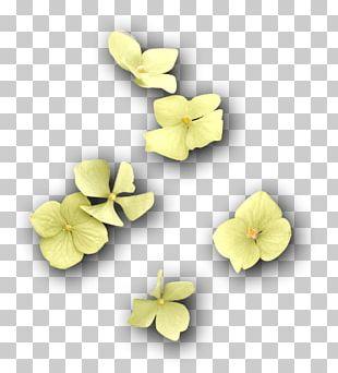 Violet Violaceae PNG
