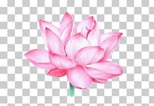 Nelumbo Nucifera Vajra Shadowology Buddhism Buddhist Symbolism PNG