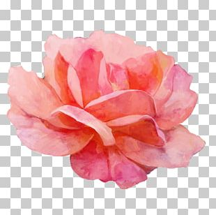 Garden Roses Watercolor Painting PNG