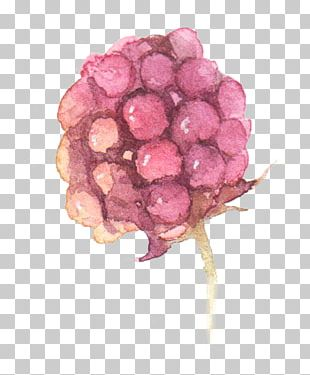 Watercolor: Flowers Watercolor Painting Grape PNG