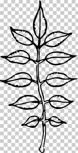 Black And White Leaf PNG