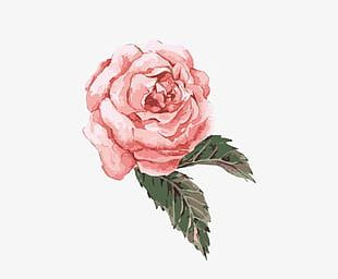 Hand-painted Watercolor Flower Pink PNG