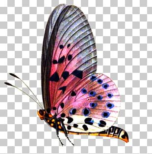 Butterfly Editing PicsArt Photo Studio PNG