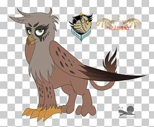 Owl Bird Beak Feather PNG