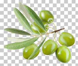 Olive Leaf Olive Oil PNG