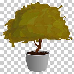 Tree Plant Bonsai PNG