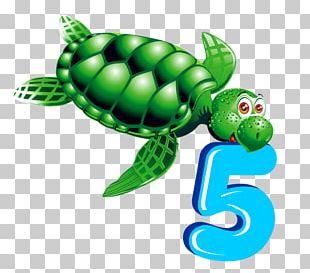 Numerical Digit Sea Turtle PNG