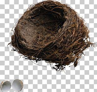 Bird Nest Edible Bird's Nest PNG