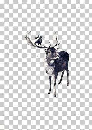 Pxe8re Davids Deer Drawing Watercolor Painting Illustration PNG