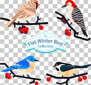 Bird Parrot Feather PNG