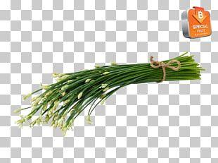 Allium Fistulosum Herb Scallion Welsh Cuisine Grasses PNG