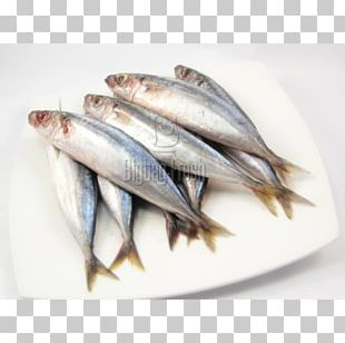 Sardine Pacific Saury Fish Products Oily Fish Blackfin Scad PNG