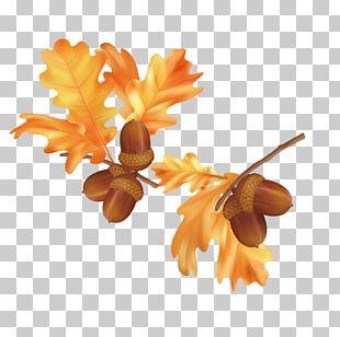 Autumn Leaf Color Autumn Leaf Color Euclidean PNG