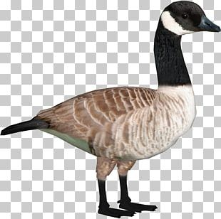 Zoo Tycoon 2 Canada Goose Duck PNG
