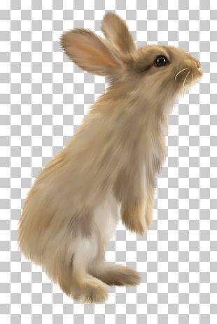 Domestic Rabbit Hare Lionhead Rabbit Volcano Rabbit PNG