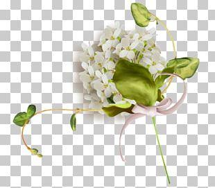 Floral Design Cut Flowers PNG