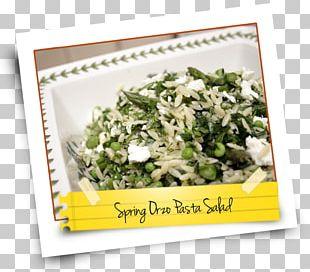 Vegetarian Cuisine Leaf Vegetable 09759 Recipe Salad PNG
