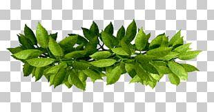 Leaf Branch PNG