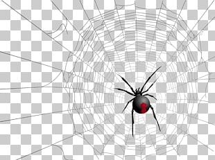 Widow Spiders Insect Symmetry Pattern PNG