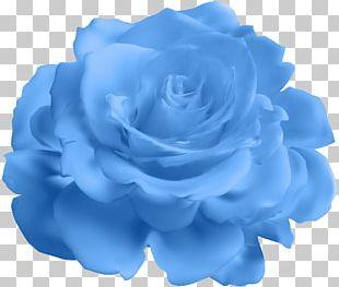 Blue Rose Garden Roses Cabbage Rose PNG