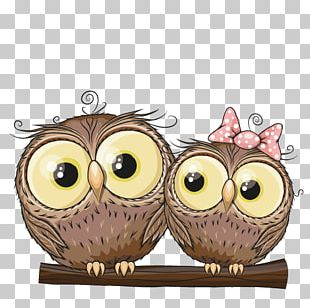Owl Stock Photography Illustration PNG