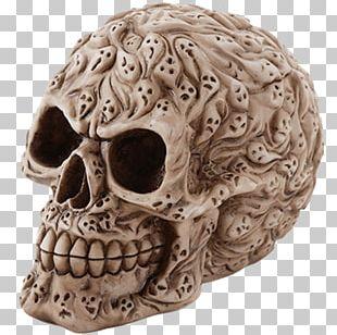 Human Skull Calavera Skeleton Bone PNG