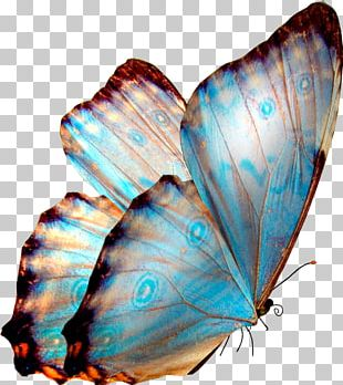 Butterfly Transparency And Translucency Desktop PNG