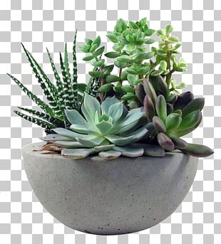 Succulent Plant Gardening Flower PNG