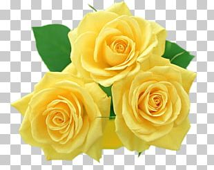 Flower Yellow Rose PNG