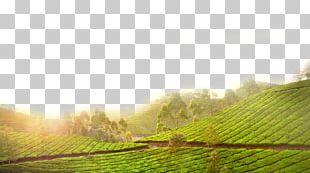 Tea Canh Thxe2n Green PNG