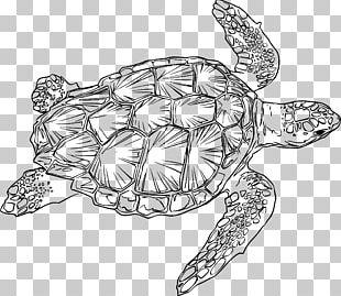 Loggerhead Sea Turtle Drawing Green Sea Turtle PNG