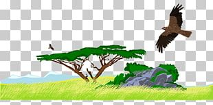 Jungle PNG