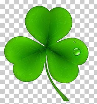 Ireland Shamrock Saint Patrick's Day Irish People PNG